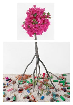 Bougainvillea & Shotgun Shells: Still Life Photograph of Pink Flowers on White