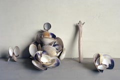 Clam Shells (Still Life Photograph of Blue/White Shells with Drift Wood)