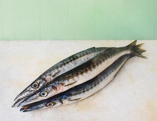 PAD Decke Fisch Sardine Apricot
