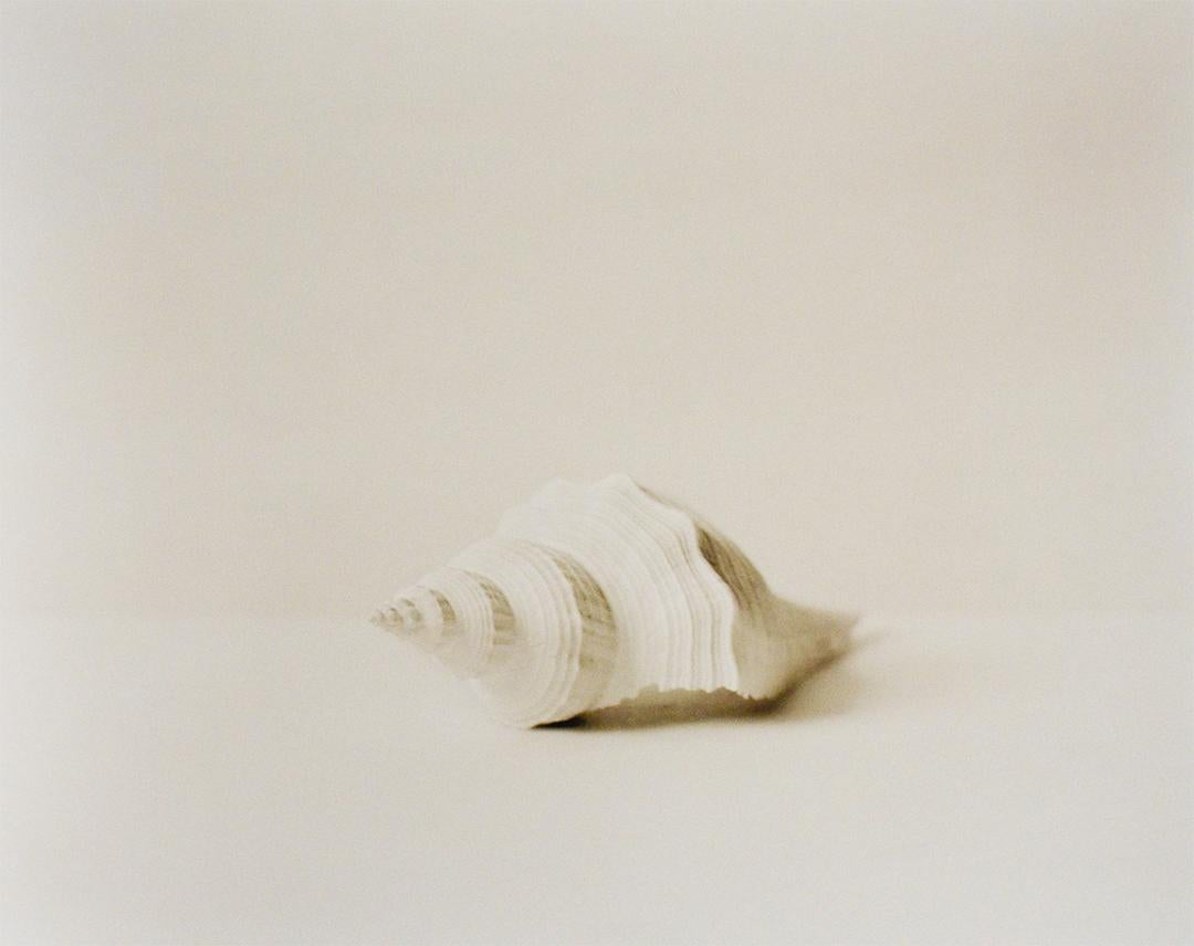 Shell (Black & White Still Life Photograph of a White Shell, Framed)
