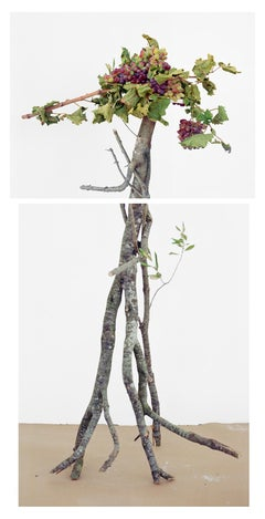 Walking Grapes: Figurative Still Life Photograph of Grapes & Branches