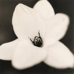 Beetle on Onion Flower
