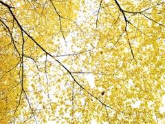 Flat Rock 2 - Traditional 15 - Minimal landscape, tree w/ yellow leaves