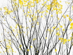 Traditional 23 - Palisades 2 - Minimal yellow black tree nature abstract branch