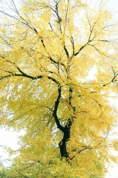 Traditional 83 - Bright abstract tree landscape, black branches & yellow leaves