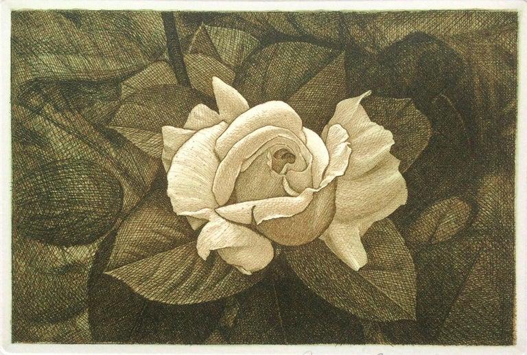 David Smith-Harrison Still-Life Print - Rose