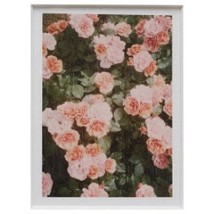 David Urbano the Rose Garden No. 21