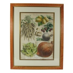 Antique 19th Century French Vilmorin-Andrieux & Cie Vegetable Poster