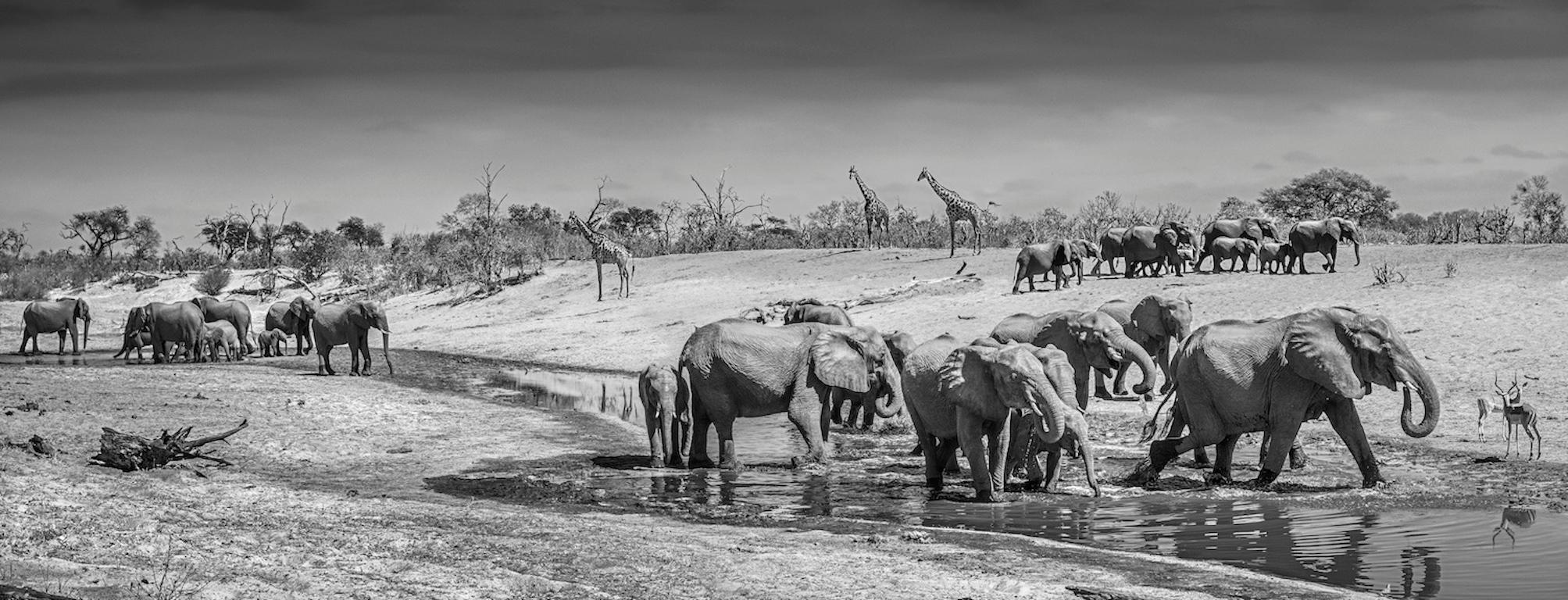 Before Men, Black and White Animal Photography