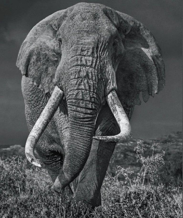 David Yarrow Black and White Photograph - Bunga Bunga
