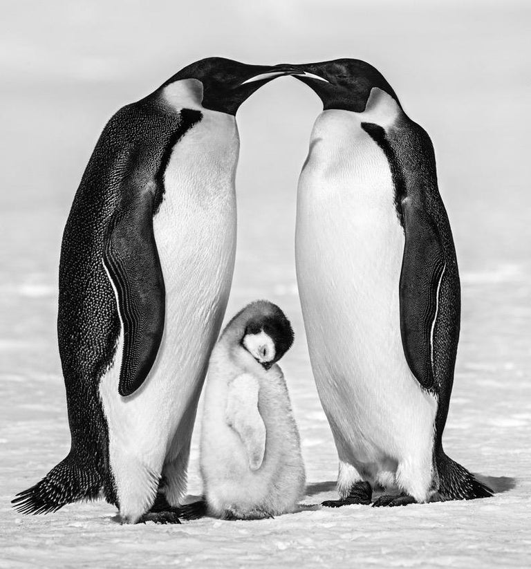 David Yarrow Black and White Photograph - Contentment II