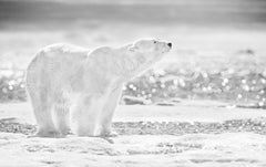 David Yarrow, The emperor of the North, Contemporary Black and White photography
