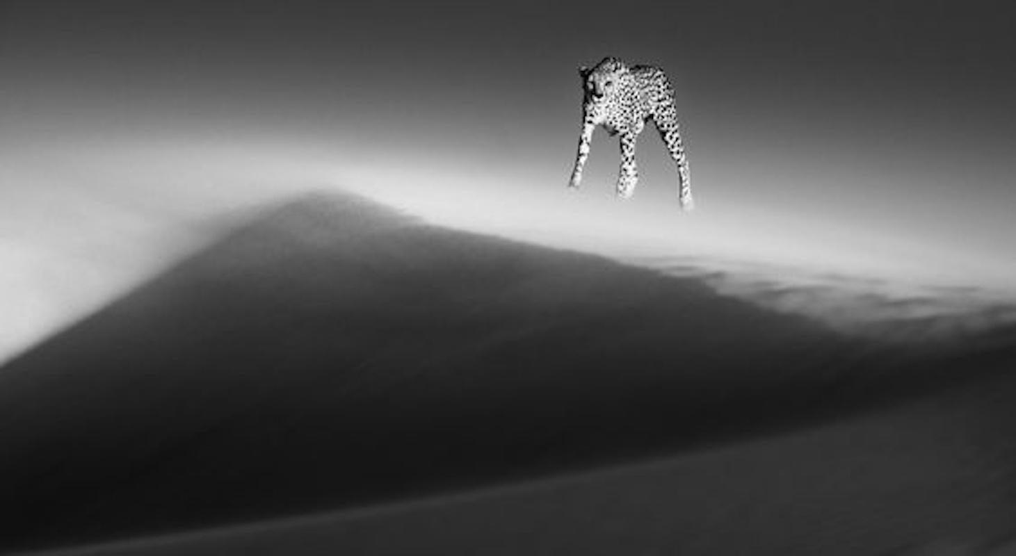 Ethereal Dune