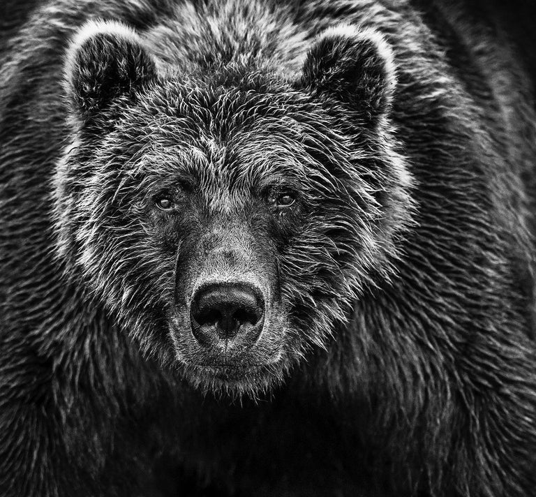 David Yarrow Black and White Photograph - Face Off, Archival Pigment Print, Contemporary Black and White photography
