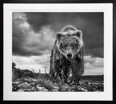 'Funnel Creek' Grizzly Bear in Alaska