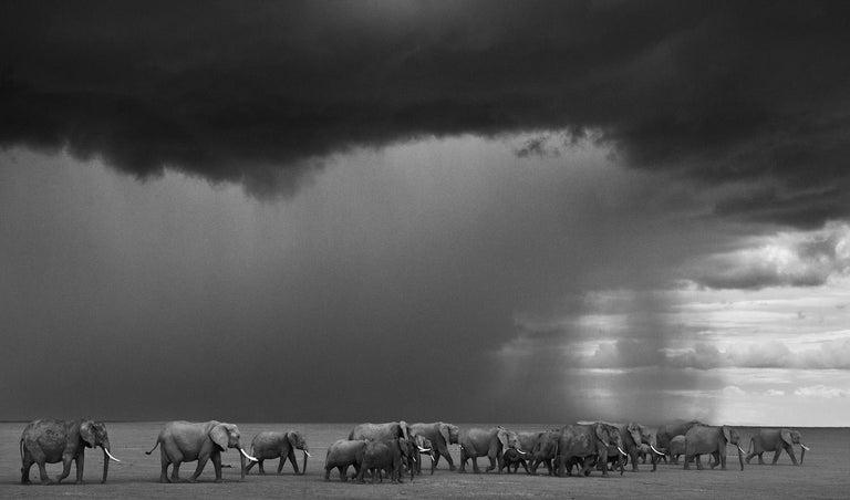 David Yarrow Black and White Photograph - Gathering Storm,Contemporary Black and White photography