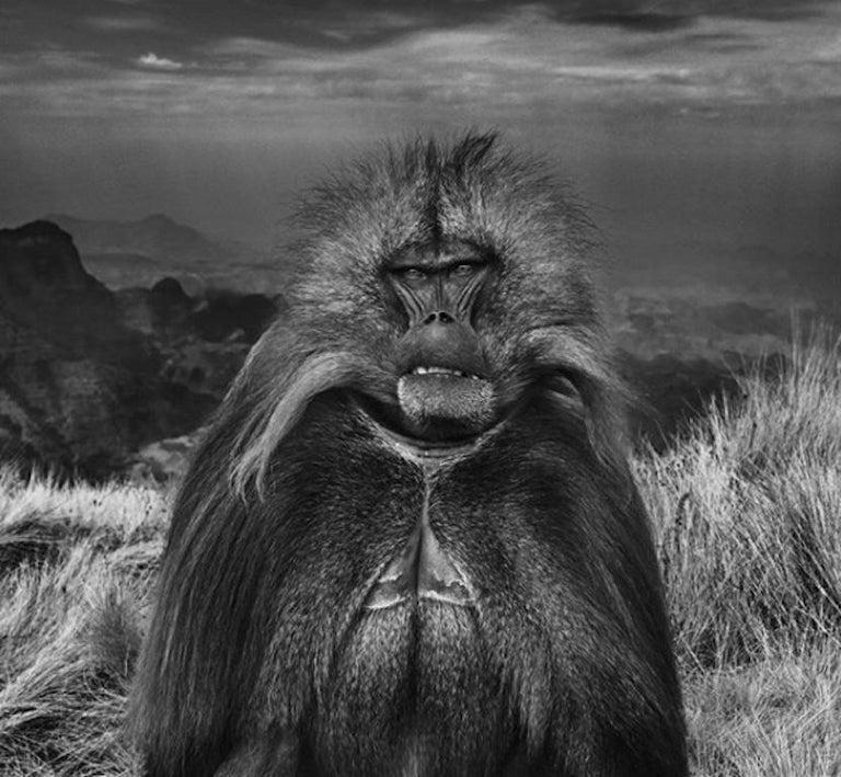 David Yarrow Black and White Photograph - Go Ahead Punk, Make My Day