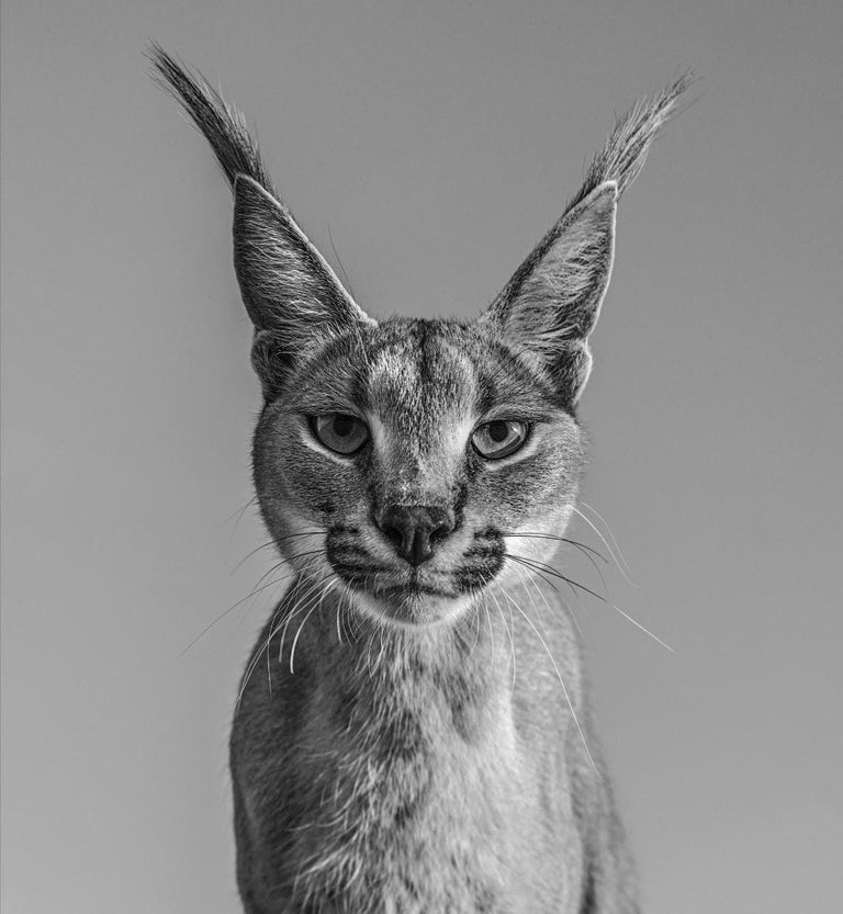 David Yarrow Black and White Photograph - Harry Potter