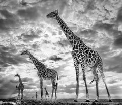 Keeping Up With The Crouch's, Black and White Animal Photography