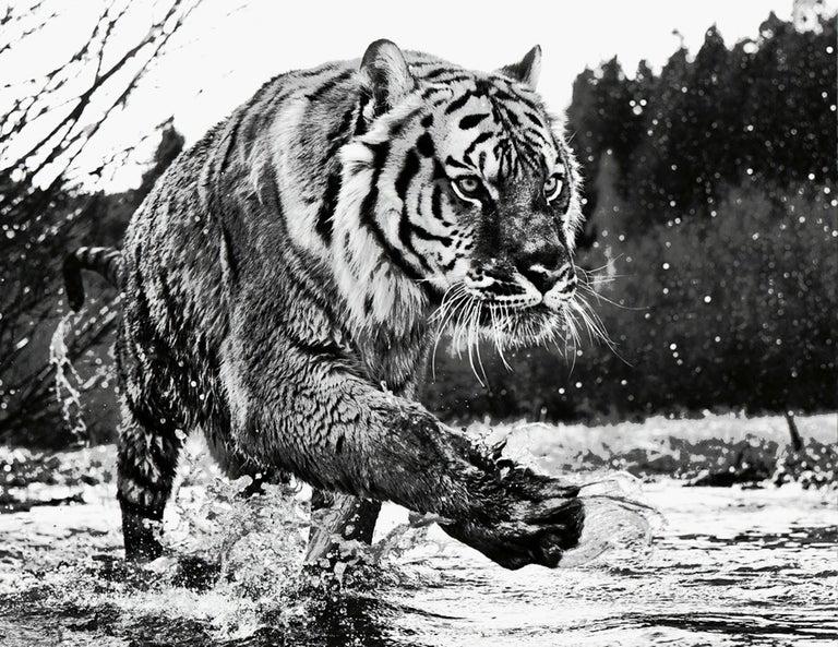 David Yarrow Black and White Photograph - Mystic River