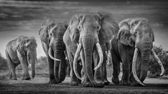 Squad, Black and White Animal Photography