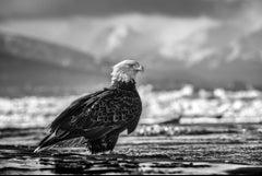 The Bird on the Beach