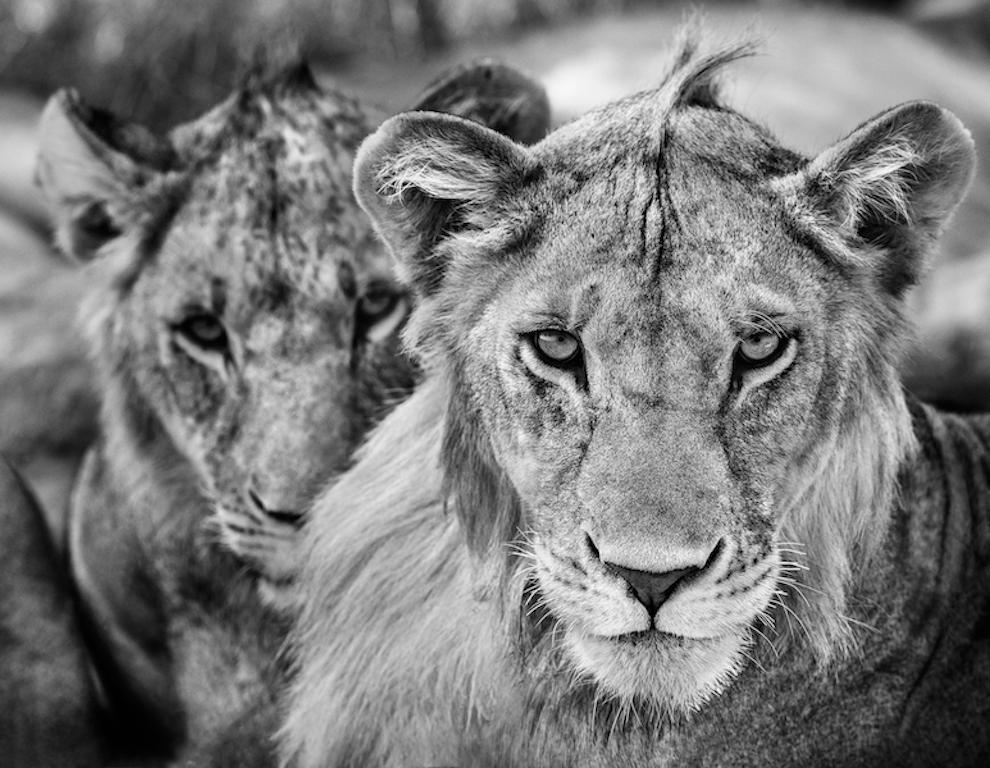 The Boys Are Back In Town, Black and White Photography