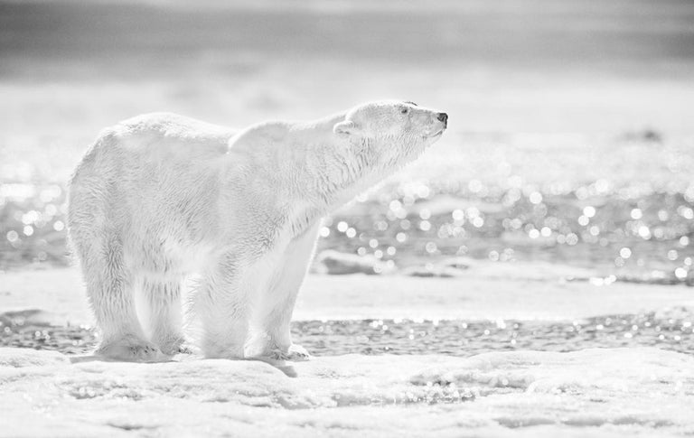 David Yarrow Black and White Photograph - The Emperor Of The North