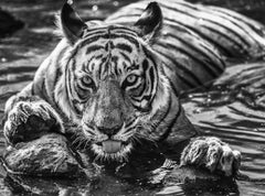 The Queen of Ranthambore
