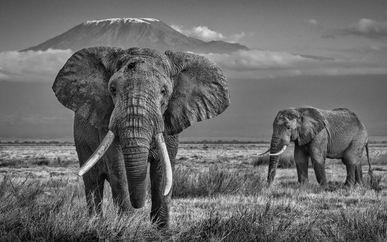 David Yarrow Black and White Photograph - The Witness