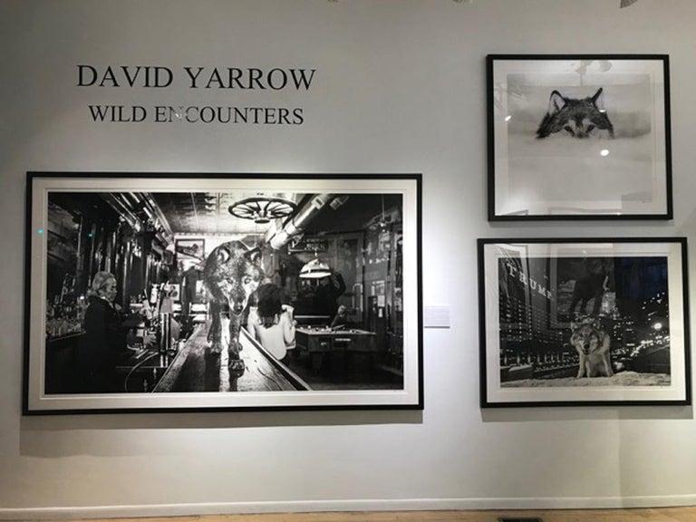 The Wolf of Main Street III - Photograph by David Yarrow