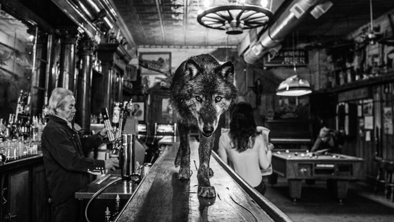 David Yarrow Black and White Photograph - The Wolf of Main Street III
