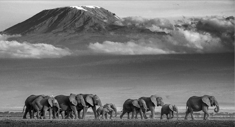 David Yarrow Black and White Photograph - Walk the Line