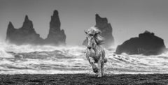 White Horses, Archival Pigment Print ,Contemporary Black and White photography