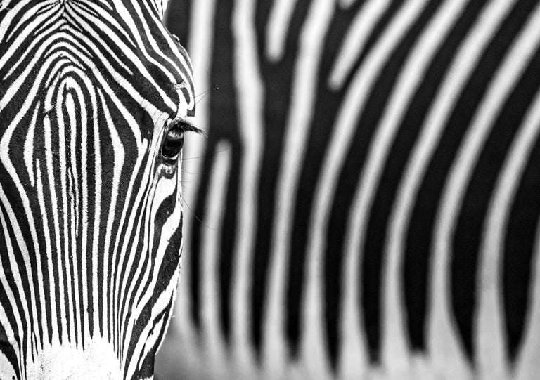 David Yarrow Portrait Photograph - White Lines