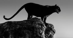 Black Cat, Black and White Animal Photography