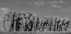 Defense, Animal Print, Black and White Photography
