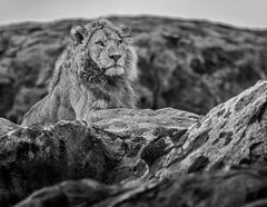 Serengeti, Archival Pigment Print, Black and White Photography