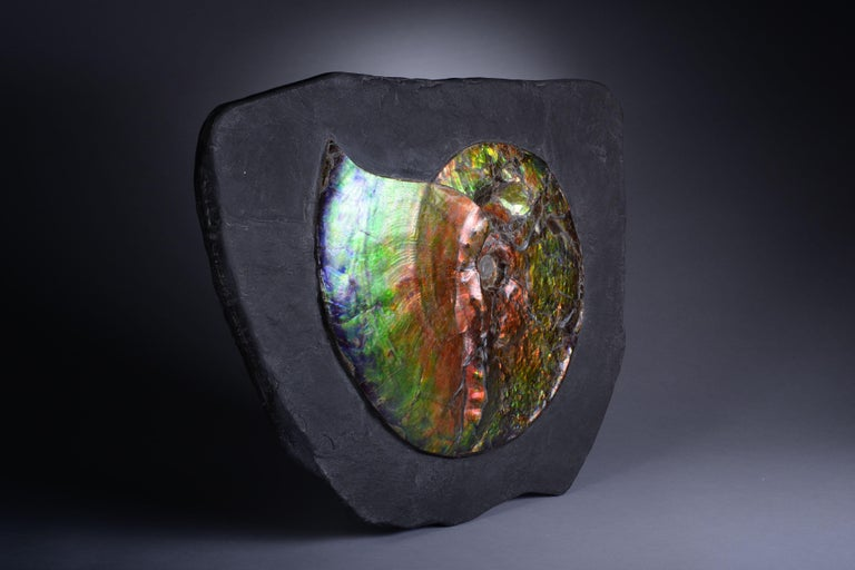 Dazzling Opalescent Ammonite Fossil For Sale 1