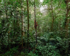 Sumartan Orangutan