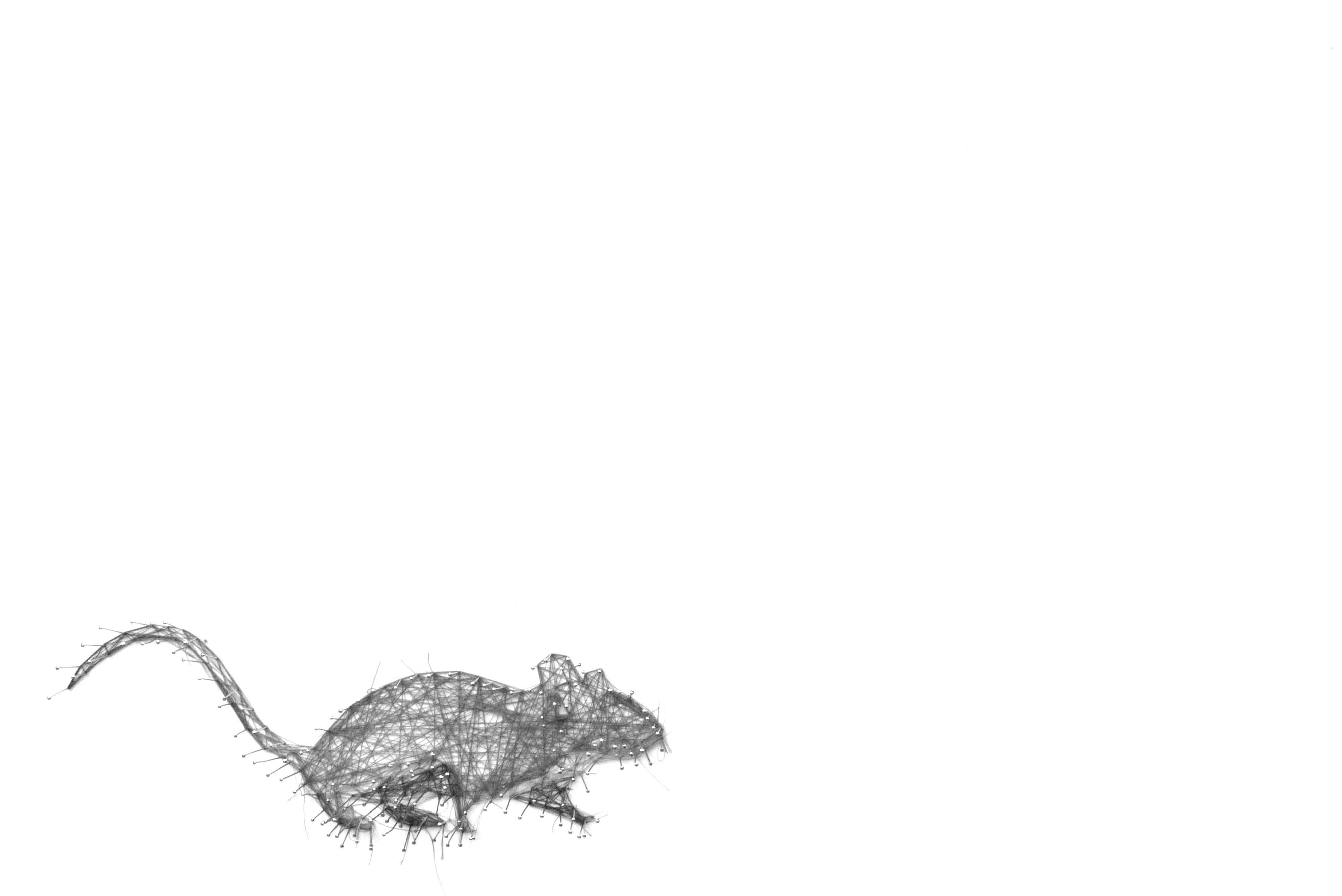 Ratty - mixed media animal rat artwork black grey thread pins