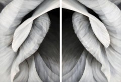 Untitled No. 30, diptych (vertical view)