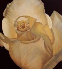 Yellow Rose Study