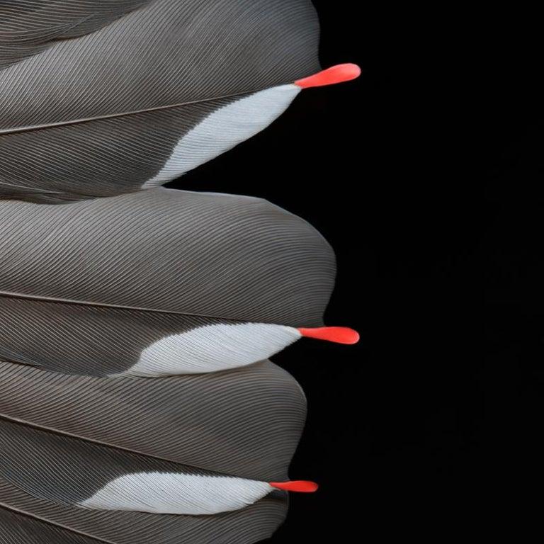 Cedar Waxwing I - Photograph by Deborah Samuel