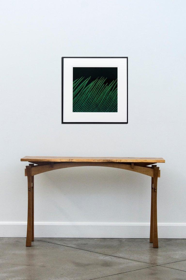 Resplendant Quetzal VI - Contemporary Photograph by Deborah Samuel