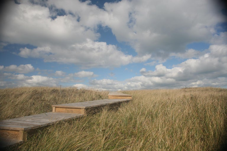 Debranne Cingari Landscape Photograph - Pathway to Heaven