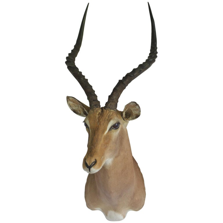 Decorative African Antelope Taxidermy Mount For Sale