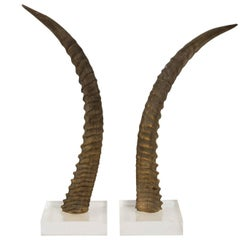 Decorative Antelope Horns