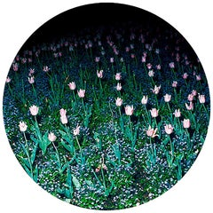 "Dessert Porcelain Plate Collection Rue de Paradis Model "" Tulips"""