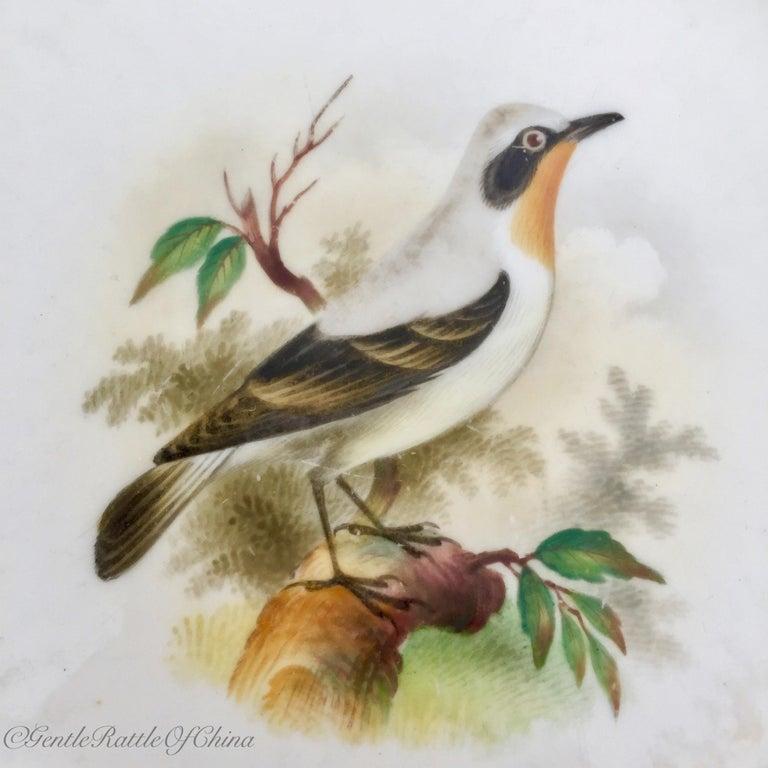Minton Porcelain Dessert Service, Named Birds by Joseph Smith, Victorian 1851 For Sale 3